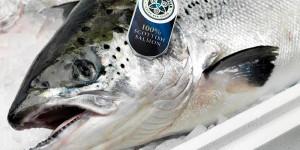 Scottish farmed salmon