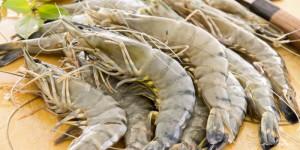 black-tiger-shrimp